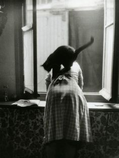 Les chats de Willy Ronis, Paris, 1954 (Willy Ronis)