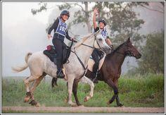 Home - Kael Park Spanish Arabians