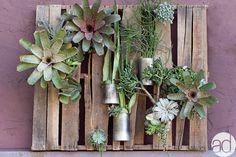 Natural Wall Display located on the Accent Decor Design Center.