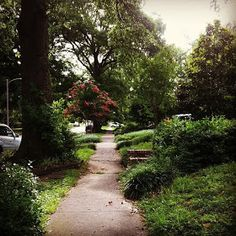 Beautiful street in midtown Memphis. Lots of streets like this one. Memphis, city of trees!