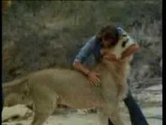 Christian the Lion is reunited with his owners. You've probably seen it but..it still very touching