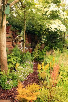 Cottage garden in June