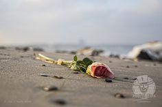 Reportage // #Ostsee #Meer #See #Trauer #Symbolbild #Strand #Rose #Reportage #Fotograife #Reportagefotografie / gepinnt von www.KERPA.com