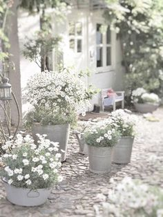 White daisies and container plantings….:
