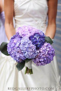 love purple hydrangea