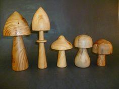 Quelques champignons en bois : ( de gauche à droite ) Thuya Laurier Cyprès Marronnier Pommier