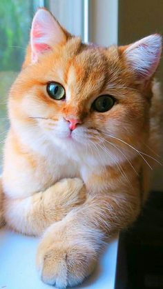 This cat is beautiful...look at that color..  |pinterest: @BossUpRoyally [Flo Angel]