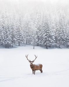 Image uploaded by Hippy. Find images and videos about winter, christmas and animal on We Heart It - the app to get lost in what you love. Winter Szenen, Winter Love, Winter Magic, Winter Is Coming, Winter Coats, Winter Season, Hello Winter, Winter Travel, Winter Photography