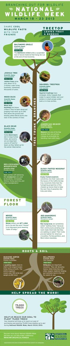 plant a tree for national wildlife week