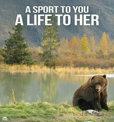 It's not just her life that is taken but also that of her cubs that starve and die when she doesn't come home