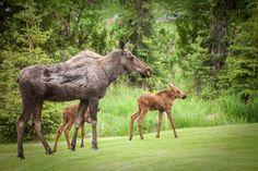 Best Alaska Wildlife Viewing Experiences