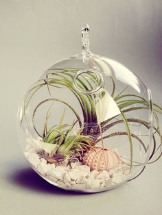Shipwrecked // Air Plants in Glass Globe Hanging Terrarium