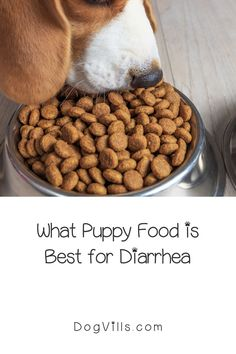 What puppy food is best for diarrhea?That question is far more common than you might think, especially considering the fact that puppies have sensitive tummies! Best Dog Food, Best Dogs, Puppy Food, Dog Food Recipes, Puppies, Cubs, Puppys, Pup, Baby Puppies