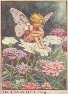 Google Image Result for http://www.flower-fairies-pictures.co.uk/_images/flowerfairies/twg/Candy_Tuft.jpg