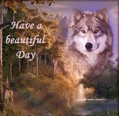 Have a beautiful day! Wolf Images, Wolf Photos, Wolf Pictures, Good Morning Animals, Good Morning Nature Images, Good Night Dear Friend, Good Morning Friends, Lone Wolf Quotes, Wolf Qoutes