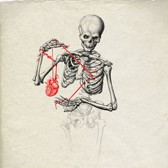 'Skeleton anatomy' by maramk Skeleton Drawings, Skeleton Art, Art Drawings, Skeleton Anatomy, Arte Obscura, Anatomy Art, Skull And Bones, Heart Art, Horror Art