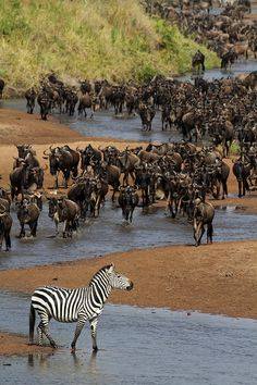 Serengeti National Park in Arusha, Tanzania