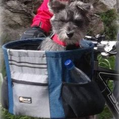 Wondering how to take your small pet with you on bike rides? The WalkyBasketTM pet carrier, by WALKY, the ultimate way to take your small pet on a bike ride! A one-of-a-kind basket, specifically designed for people and pets on the move. A basket of bare essentials; if it doesn't make it perform better or look better, it isn't there. Studied for safety and comfort, the The WalkyBasketTM is made for quick get aways as well as trips to the vet or just for fun. Shop SkyMall.com!