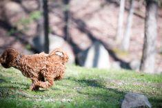 Bethesda Row, Animal Welfare League, School Photographer, What A Beautiful Day, Brown Dog, Autumn Photography, Dog Park, Cute Guys, Dog Love