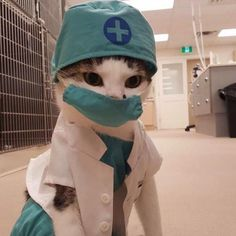 Please check my heart doctor - your daily dose of funny cats - cute kittens - pet memes - pets in clothes - kitty breeds - sweet animal pictures - perfect photos for cat moms Cute Kittens, Cats And Kittens, I Love Cats, Crazy Cats, Cute Baby Animals, Funny Animals, Animal Memes, Doctor Cat, Animal Doctor