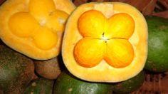 Pequi Fruta do serrado brasileiro