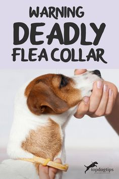 This is a report on a potentially deadly flea collar. You will learn the latest news and why it can be harmful to you and your dog. Kill Fleas On Dogs, Flea Spray For Dogs, Half A Decade, Dog Health Tips, Dawn Dish Soap, Flea And Tick, Service Dogs, News, Working Dogs