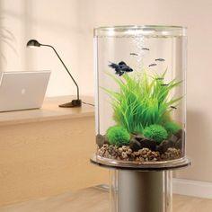 Dekoracyjne akwarium w domu / Aquarium for home decoration
