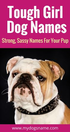 Tough female dog names for your new pup. These names are strong and sassy, just like your new dog! Tough Dog Names, Strong Girl Names, Big Dog Names, Puppies Names Female, Dogs Names List, Corgi Names, Cute Names For Dogs, Funny Girl Dog Names, Sassy Girl Names