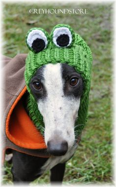 FROG HAT for greyhound/galgo/lurcher by Greyhoundstore on Etsy
