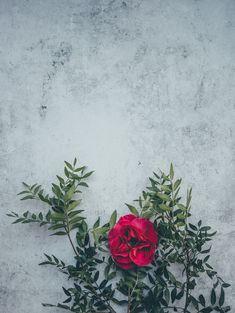 Fondos Lindos - Fushion News Flower Phone Wallpaper, Tumblr Wallpaper, Cellphone Wallpaper, Flower Wallpaper, Nature Wallpaper, Iphone Wallpaper, Free Background Images, Textured Background, Flower Backgrounds