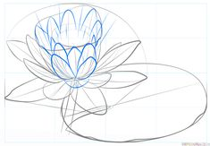 Flower sketches: How to draw a water lily and pad