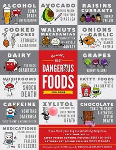 Dangerous Foods for Dogs *Need to remember this when feeding your dog holiday leftovers!