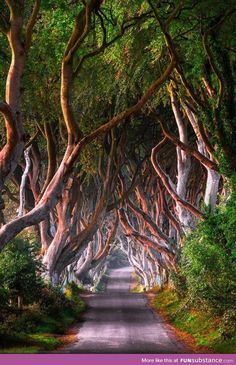 """westeastsouthnorth: """" The Dark Hedges, Ballymoney, Northern Ireland """" Dark Hedges, Places To Travel, Places To See, Beautiful World, Beautiful Places, Landscape Photography, Nature Photography, Belle France, Tree Tunnel"""