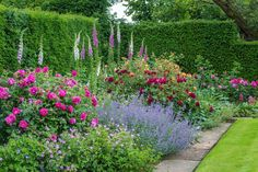 lovely border with foxgloves, old roses, nepeta and hardy geraniums