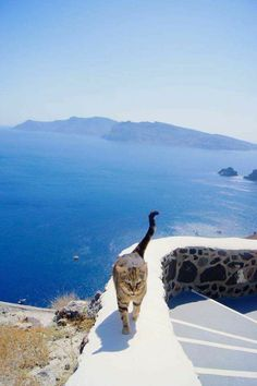 Travelling Cats (@TravellingCats) | Twitter | Kalimera | Cats of Twitter | Cats of Greece http://www.traveling-cats.com/2014/01/cats-from-athens-greece.html