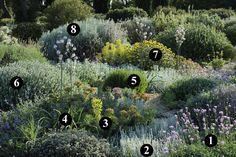 1 : Centaurea bella 2 : Artemisia lanata 3 : Euphorbia rigida 4 : Asphodelus microcarpus 5 : Lavandula x intermedia 'Grosso' 6 : Ballota acetabulosa 7 : Phlomis x cytherae 8 : Artemisia arborescens 'Carcassonne'