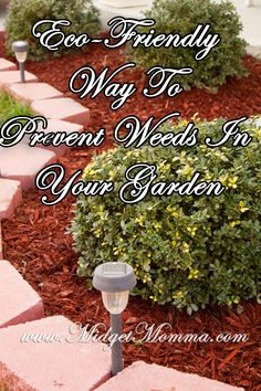 Eco-Friendly Way To Prevent Weeds In Your Garden http://www.midgetmomma.com/2013/04/29/eco-friendly-way-to-prevent-weeds-in-your-garden/