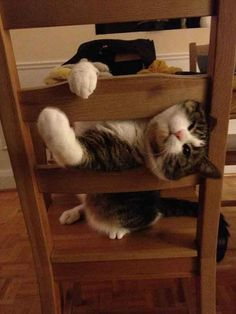 pets-stuck-furniture9
