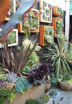 Um jardim inteiro de suculentas