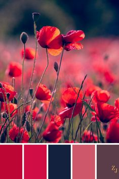 ZJ Colour Palette 713 #colourpalette #colourinspiration