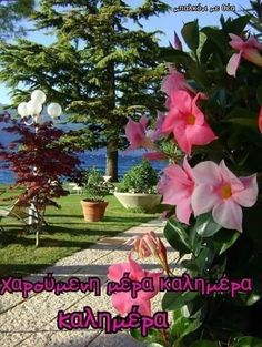 Good Morning Messages Friends, Mom And Dad, Places To Visit, Nature, Awesome, Vases, Scenery, Naturaleza, Nature Illustration