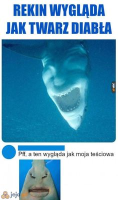 True Memes, Funny Memes, Jokes, Reaction Pictures, Funny Pictures, Funny Lyrics, Polish Memes, Flipper, Harry Potter Wallpaper