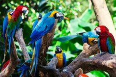 Natural colors Amazon Brazil