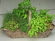 Having a basket of herbs is handy. Just bring it inside when you're cooking & return it back outside when you're finished.