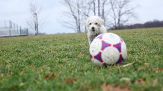 Kipper Mac the Dog Plays Football!