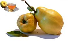 Beneficiile nestiute ale ceaiului de gutui Diabetes, Plant