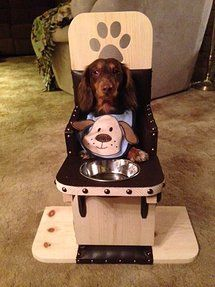 Dog High Chair Cheap Kitchen Tables And Chairs 12 Best Pierre Images Bailey For Dogs Baileys Stone We Build Diagnosed With Canine Megaesophagus