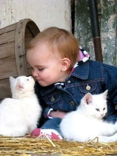 Nothing more precious than babies and animals, especially such cute cuddly little kittens. Cute Kittens, Little Kittens, Cats And Kittens, Ragdoll Kittens, Tabby Cats, Bengal Cats, Kittens Playing, Kitty Cats, Animals For Kids