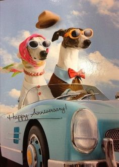 Dog Humor Couple Card: Two dogs in a car. Fun for celebration. Customize it fo Dog Humor Couple Card Anniversary Quotes For Couple, Happy Wedding Anniversary Wishes, Anniversary Greeting Cards, Happy Birthday Wishes, Parents Anniversary, Happy Aniversary, Funny Wishes, Retro, Dog Humor