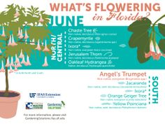 Here's what is flowering in #June. Everything is #beautiful!